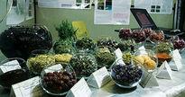 سرمایه گذاری در تولید گیاهان دارویی