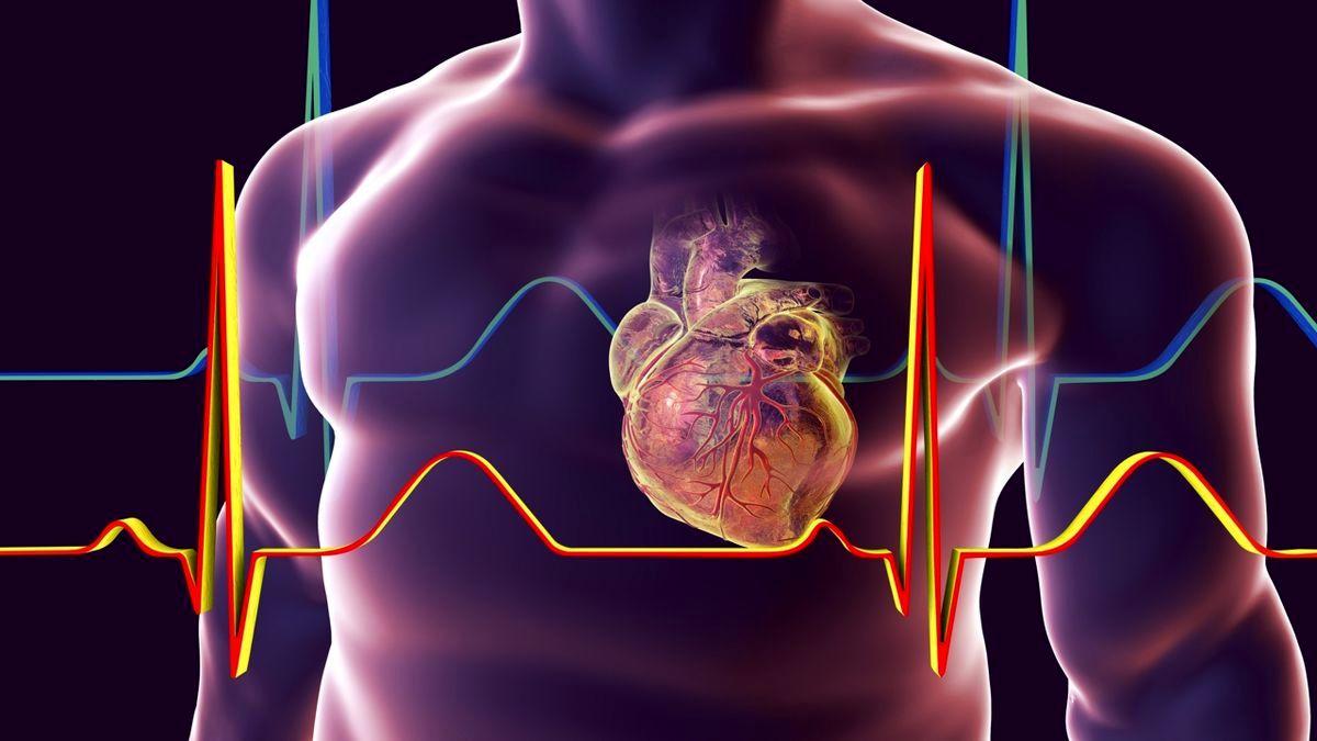 پارادوکس چاقی ، سیگنال سلولی که باعث تقویت قلب می شود!