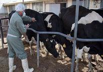 سامانه بازارگاه نهادههای کشاورزی نواقص زیادی دارد