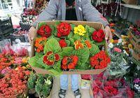 تولید گل، کسب و کاری با اشتغال بالا