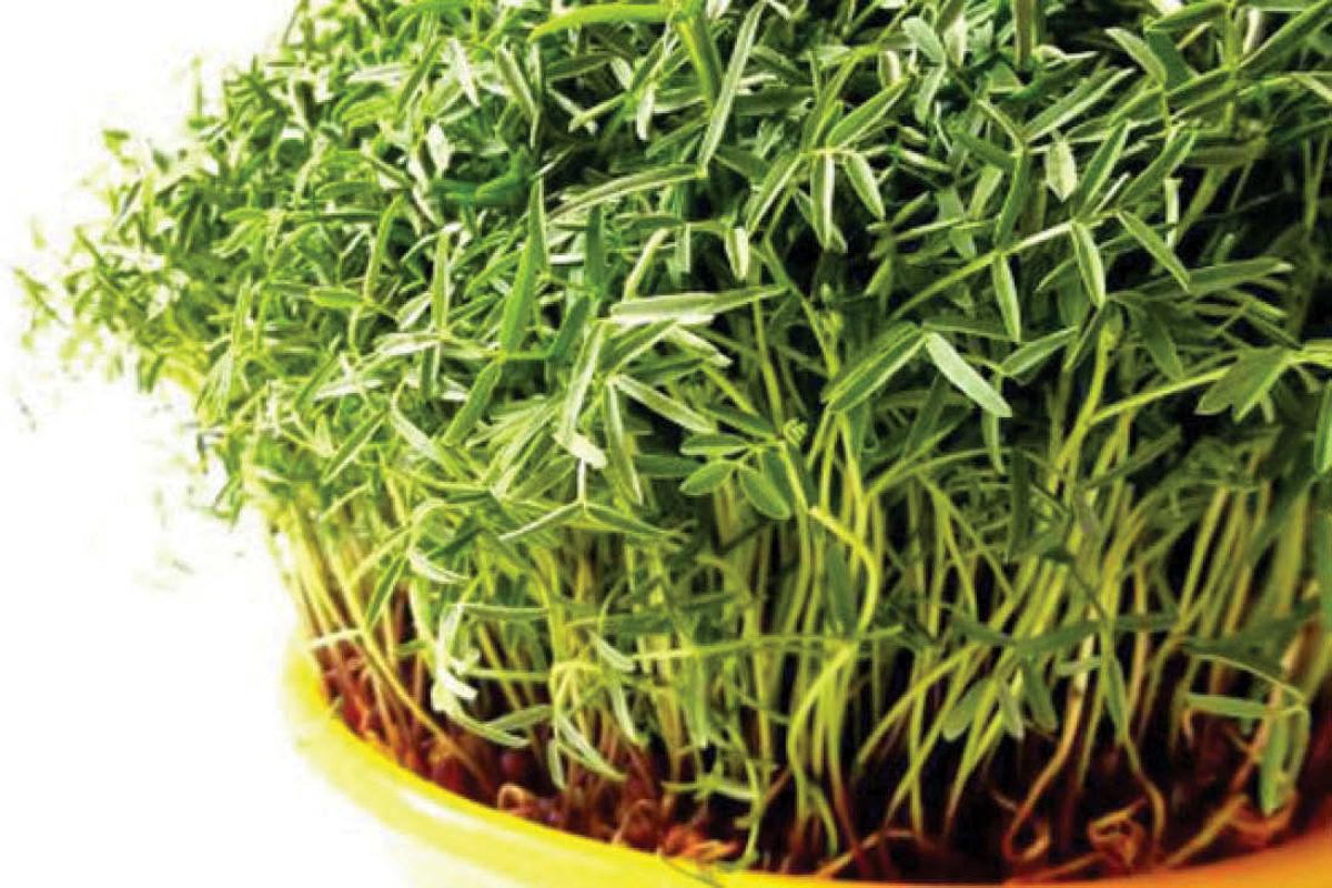 کاسبی با سبزه هفت سین