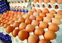 قیمت تخممرغ روند کاهشی گرفت