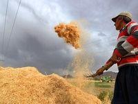 شمارش معکوس برای اعلام نرخ خرید تضمینی محصولات کشاورزی/ افت تولید نتیجه تاخیر دوباره دولت