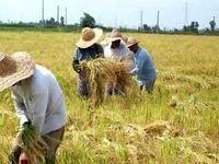 هزینههای کشاورزان نجومی شد