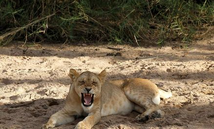 حیات وحش تانزانیا