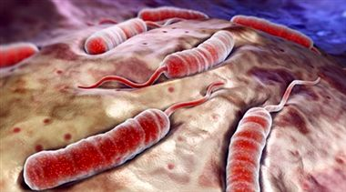 مراقب «وبا» باشید