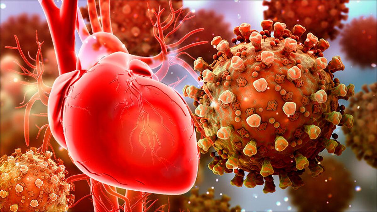 اولین مقصد ویروس کرونا در بدن قلب و ریه است