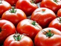 لیست جدید گرانی ۵۶کالای اساسی/ گوجهفرنگی رکورددار شد