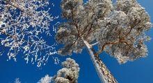 بارش اولین برف پاییزی +تصاویر