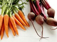 تولید سیمان با استفاده از هویج و چغندر!