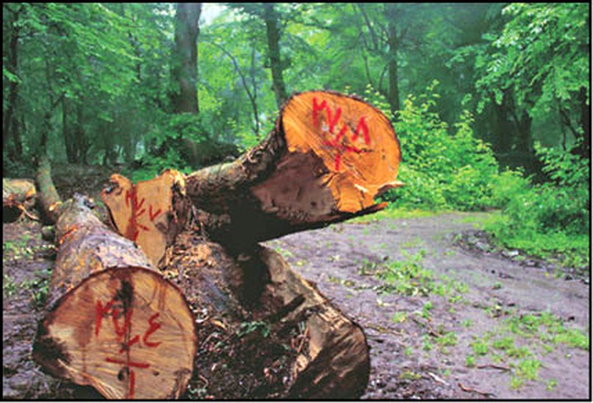ارزش هر درخت بلوط، یک میلیارد تومان