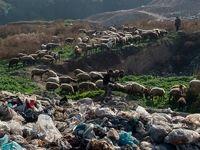 کار در معدن زباله +تصاویر