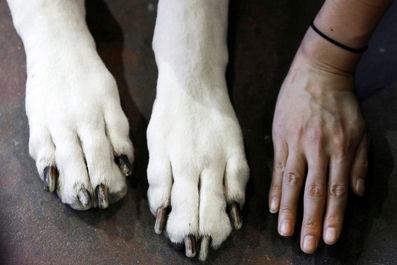 جشنواره سگهای وست مینیستر