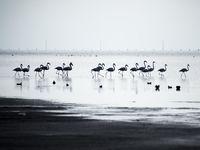 پرندگان مهاجر در استان گلستان +تصاویر