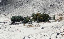 بارش برف پاییزی در همدان +تصاویر