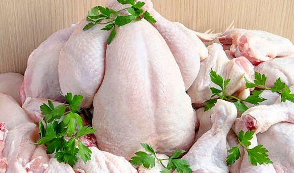مرغ گران شد/ جای نهاد ناظر خالیست