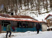 زندگی پس از برف در جنگلهای سیاهکل +تصاویر