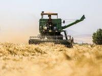 انصراف 80 تا 90 درصد کشاورزان از کشت گندم