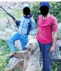 دستگیری عاملان انتشار عکس کشتار خرس در ماکو