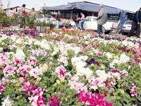 صادرات گل منتظر سرمایهگذاران خارجی