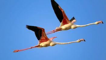 پارک ملی دریایی نایبند بهشت زمستانی پرندگان مهاجر +عکس