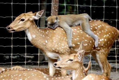 حیوانات