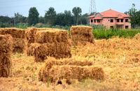 تغییر کاربری یک میلیون هکتار از زمینهای باغی و زراعی کشور