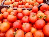 بخشنامه جدید وزارت صمت برای تسهیل صادرات گوجه