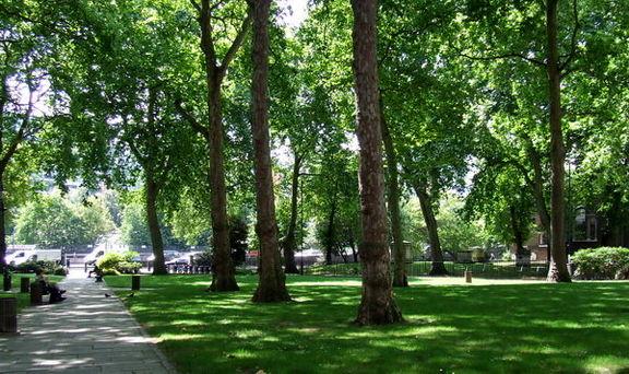سرانه فضای سبز شهر تهران ١٦برابر شده است