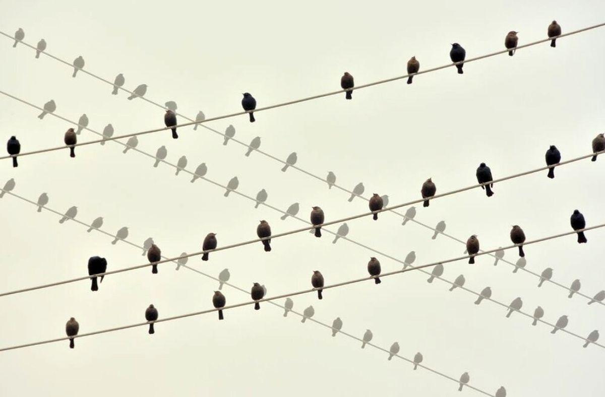 آواز گنجشکها در عکس روز نشنال جئوگرافیک