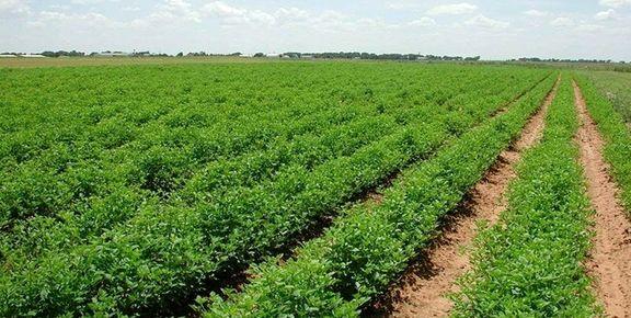 پیشبینی سالی پربار برای کشاورزان قزوینی