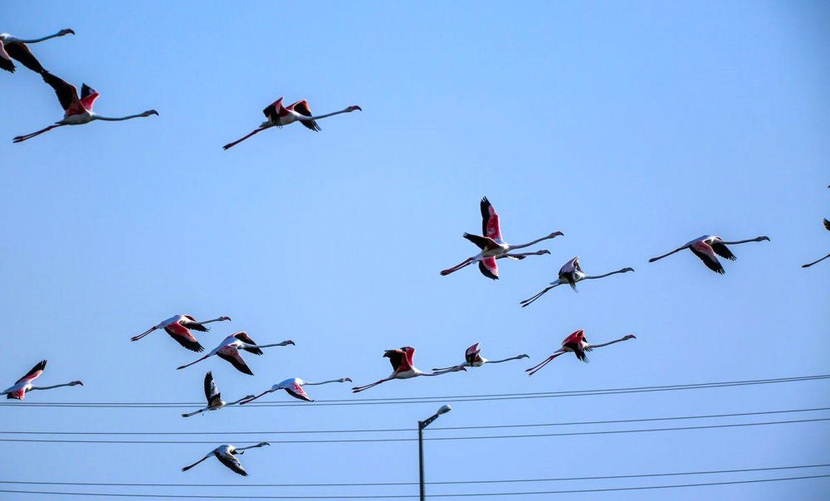 ضیافت مرگ برای پرندگان مهاجر