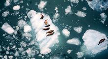 آلاسکا به روایت تصویر