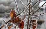 تصاویری بینظیر از درختان یخزده