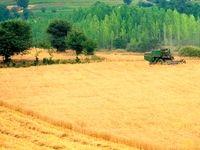 خرید یکمیلیون و ۲۰۰هزار تن گندم از کشاورزان