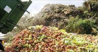 ۳۵درصد محصولات کشاورزی ایران در فرایند صادرات از بین میرود