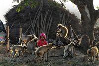 دوستی پسربچه ۲ساله هندی با میمونها +عکس