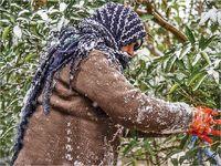 کشاورزان؛ پاسوز سیل و سرما