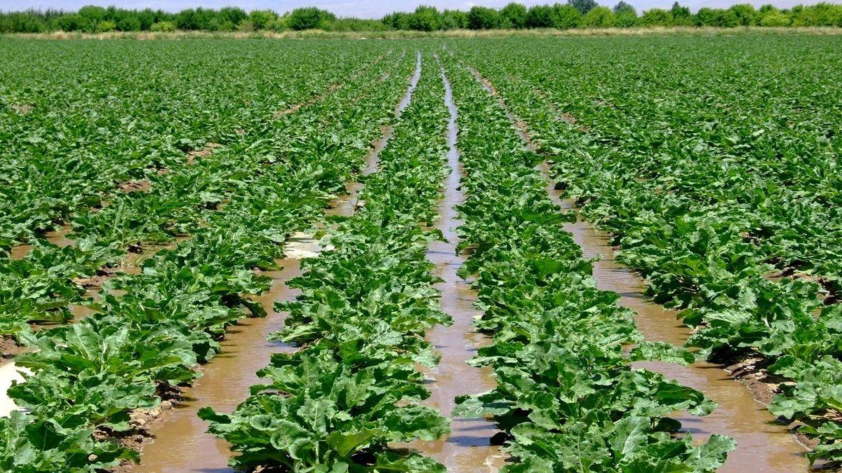 ضریب نفوذ بیمه در بخش کشاورزی؛ ضعیف