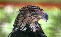 رها سازی ۱۰قطعه پرنده شکاری +تصاویر