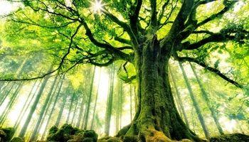 درختان تغییر جنسیت میدهند!