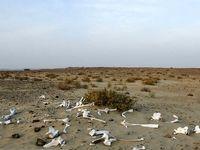 خشکسالی در «جاسک» +تصاویر