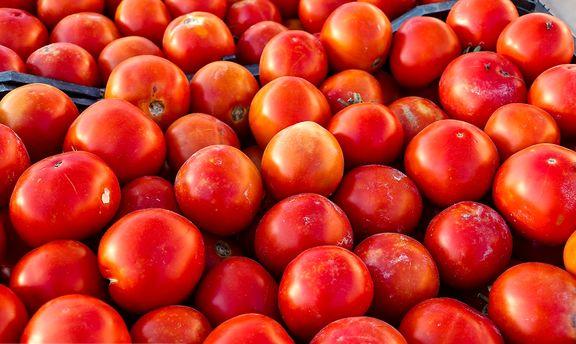 گوجه 42درصد ارزان شد