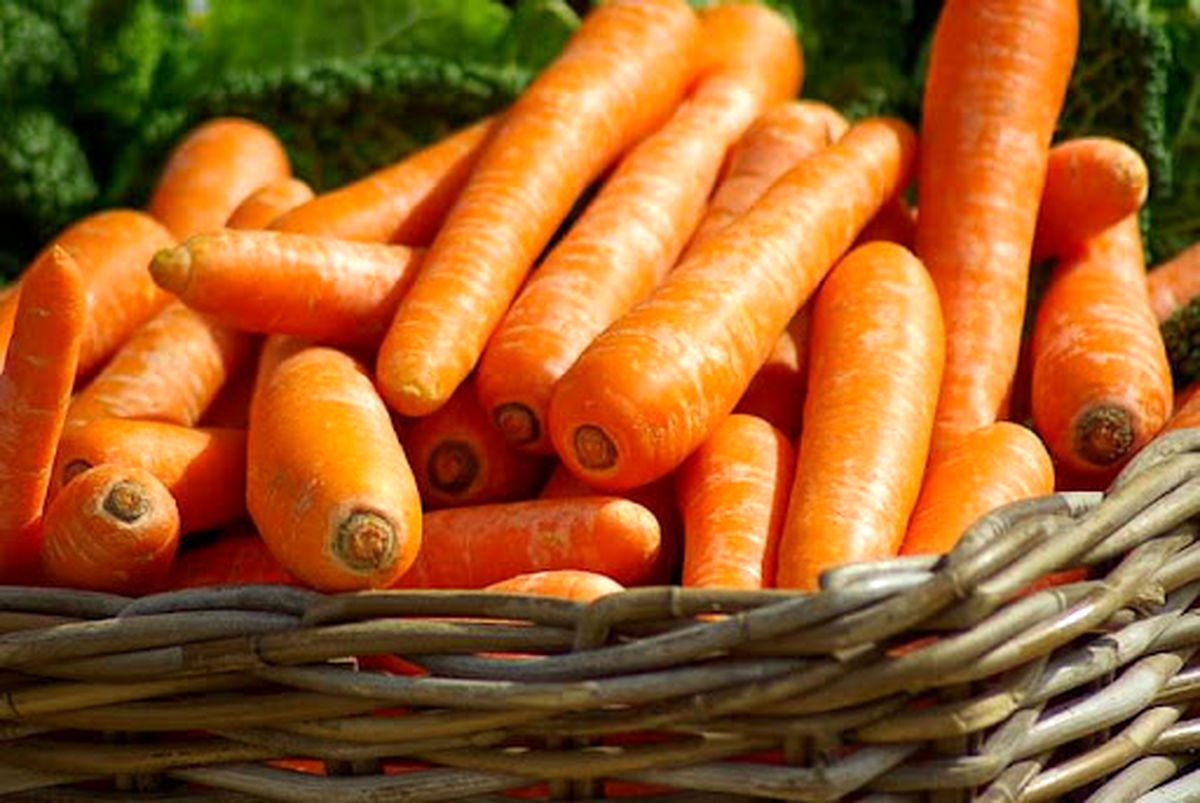 هویج بالاخره ارزان شد