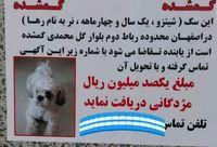 مژدگانی 10میلیونی برای سگ خانگی +عکس