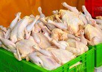 عرضه مرغ تازه در میادین و بازارهای میوه و تره بار، کیلویی 9790تومان