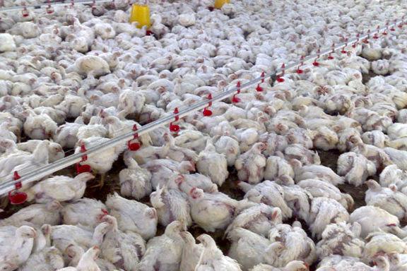 آنفلوآنزای پرندگان مختص فصل سرد نیست
