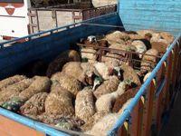 آدرس غلط یک نماینده در آشفته بازار گوشت/ به کام دلالان، به زیان مردم!