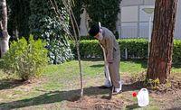 تصاویری از رهبر انقلاب را درحال درختکاری
