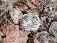 کشف ۲۵۰کیلو گوشت فاسد از داخل پراید